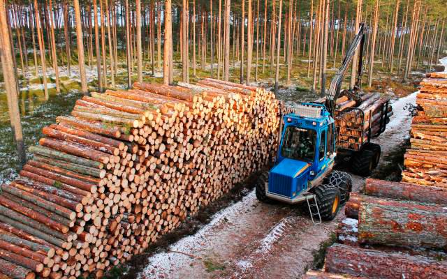 Skogsentreprenad